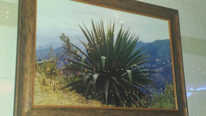 Portrait of an Agave Plant on the restaurant's wall